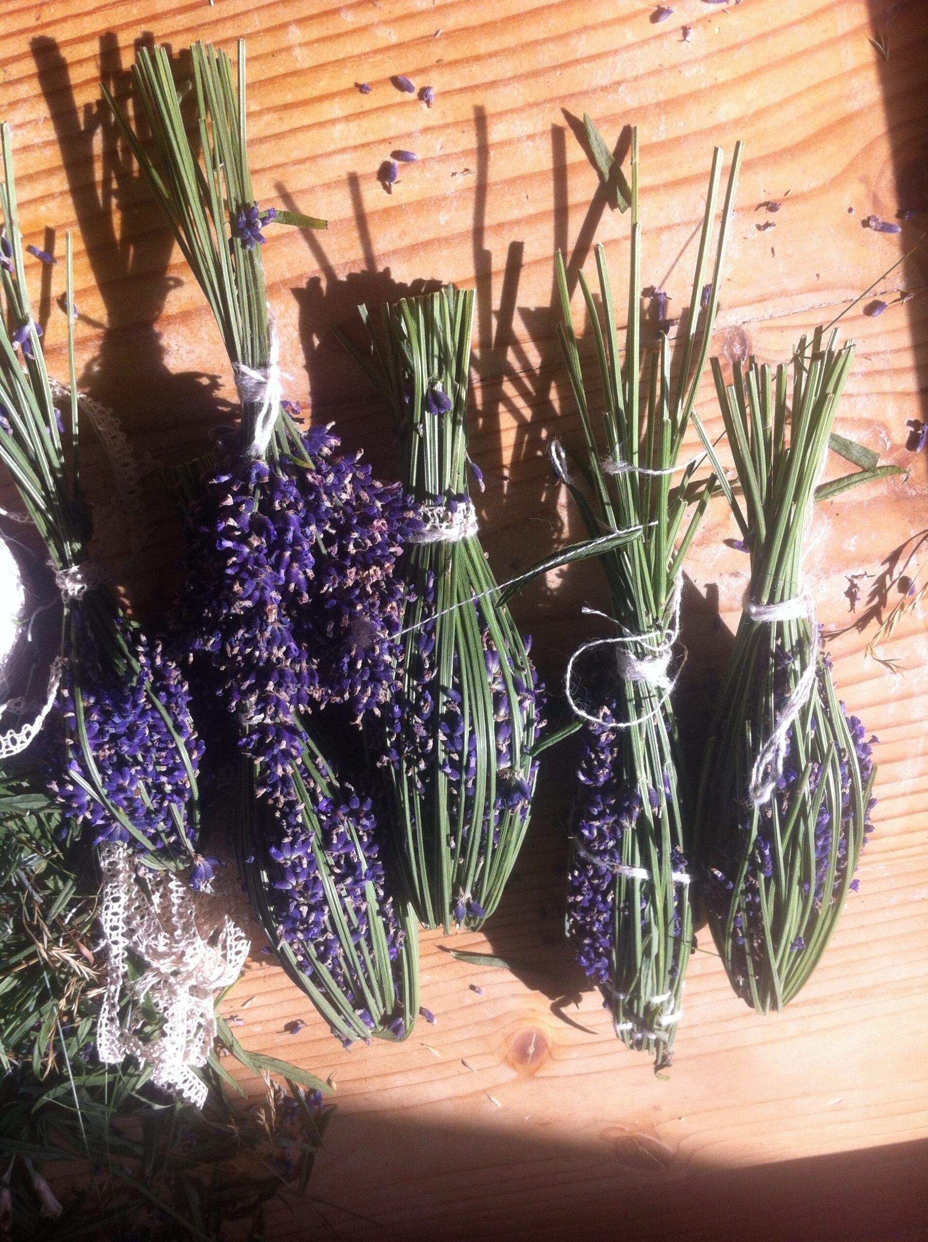 Lavendelposer